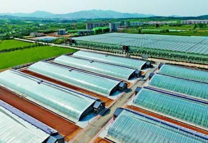 青岛推进农业供给侧结构性改革 建成现代农业园区837个