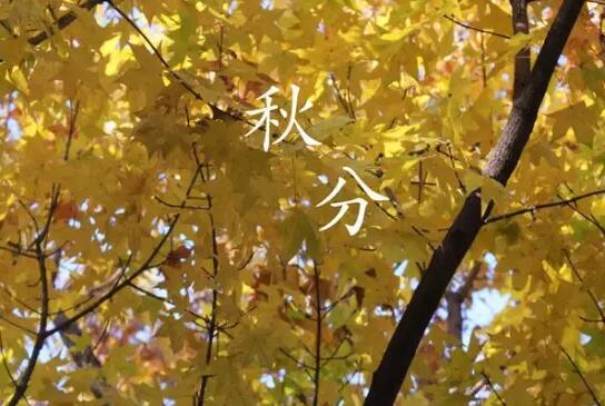 游金地百科:秋分 你了解多少?