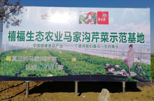 禧福集团国家地理标志保护农产品之马家沟芹菜——精选优良品种 美味一脉相承