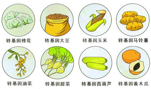 纯属谣言:中国人体内出现转基因作物中常见基因?这是假的!