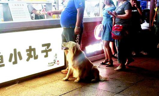青岛整治不文明遛犬行为 一晚上共劝阻20余起