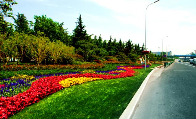 """青岛城阳全力提升城市环境品质 助力""""阳光城阳的""""建设"""