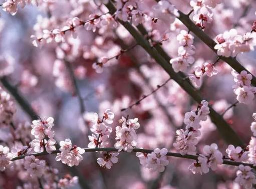 春天到了 背上背包拿上相机去徐州看最美的花海