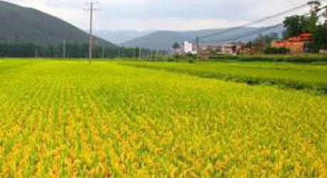 禧福集团国家地理标志保护农产品:原产地 原生态 非转基因更健康