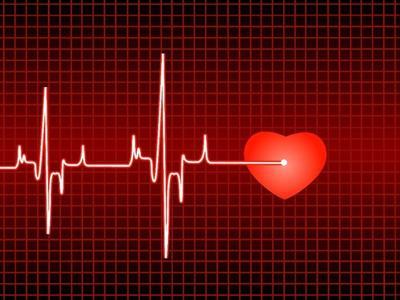 心跳的快慢直接影响寿命的长短