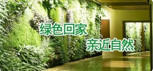 青岛每家园艺科技有限公司——一家专注于专注于智能植物绿墙的研发和推广的绿色企业