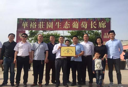 青岛市潍坊商会到商会副会长单位即墨华裕庄园参加生态美食节樱桃采摘活动